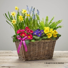 Happy Birthday Bold Brights Planted Basket